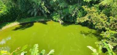paraiso natural, cabañas,rio ,lago y senderos ecologicos 2