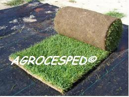 Agrocesped. Césped natural en tepes. 5
